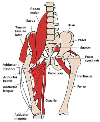 Hip Flexor Group